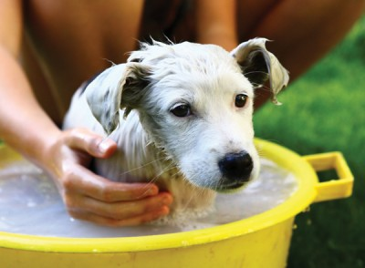 Image of dog getting a bath