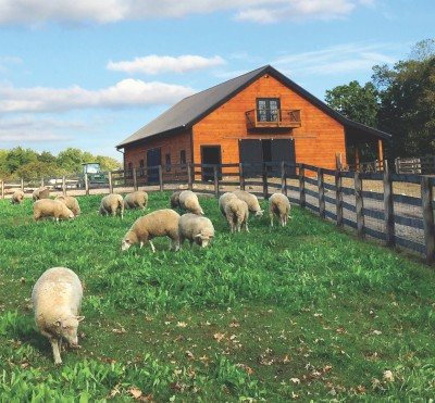 Image of Robin Hills Farm