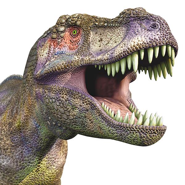 image of T Rex head